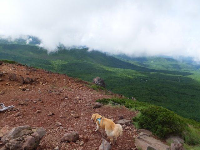 茶臼山と縞枯山 2017.8.4 262