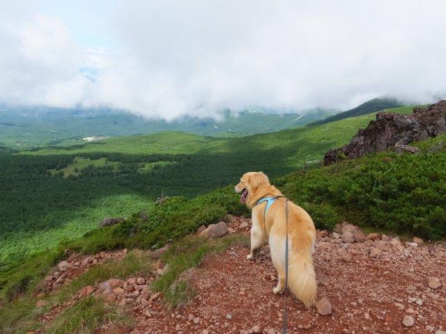 茶臼山と縞枯山 2017.8.4 263
