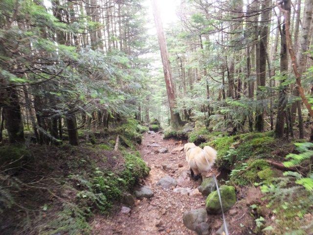 茶臼山と縞枯山 2017.8.4 267