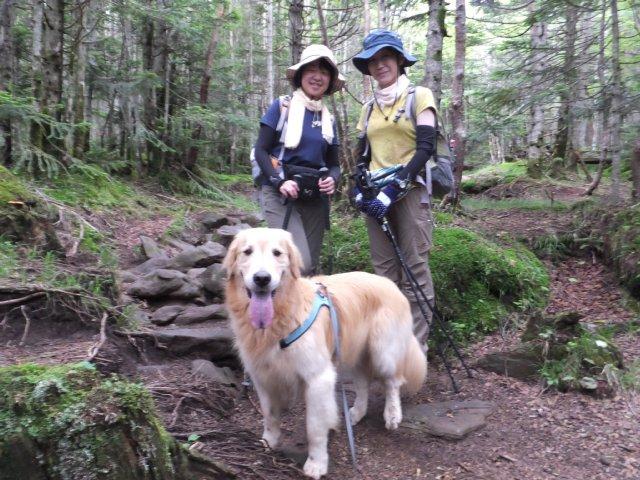 茶臼山と縞枯山 2017.8.4 275