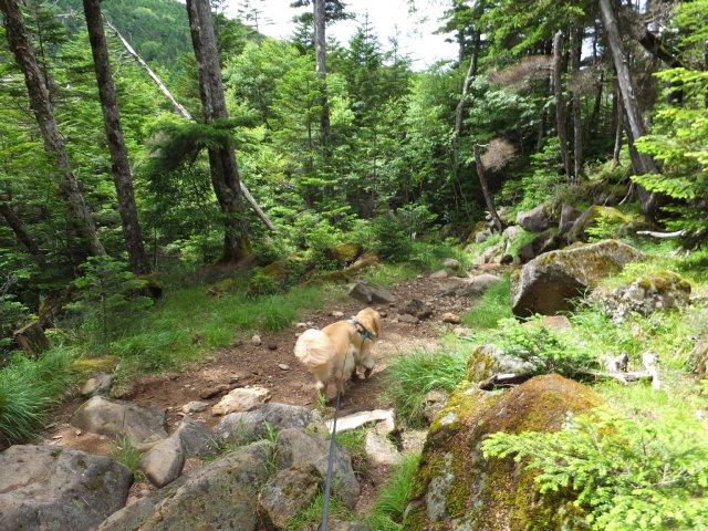 茶臼山と縞枯山 2017.8.4 299