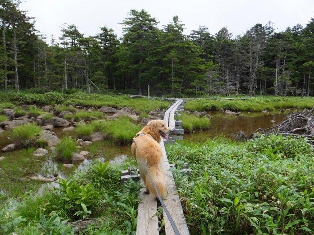 茶臼山と縞枯山 2017.8.4 301