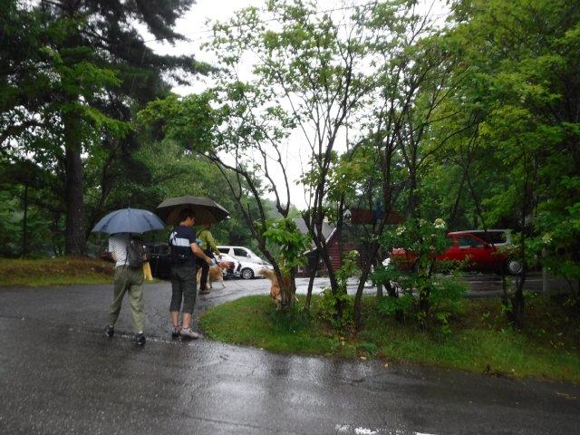 八ヶ岳渓流2017.8.16 061