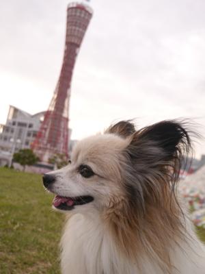 神戸2−1