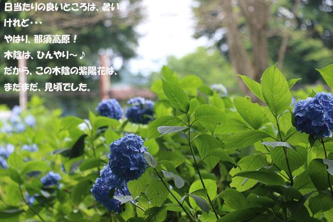 0A1A0394-9876543456-98765.jpg