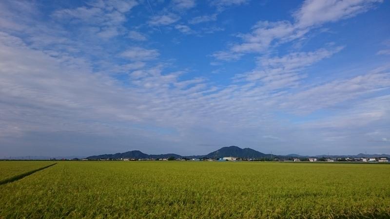 DSC_0292稲刈り間近