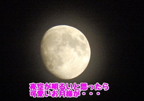 可愛いお月様