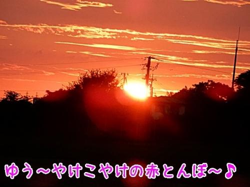 夕日は直ぐに沈んで~