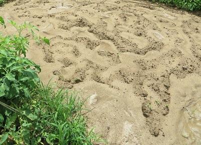畑、大雨・2