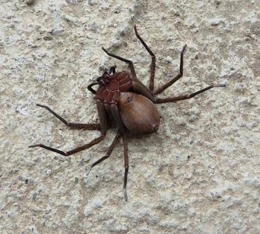 クモと蜂・3