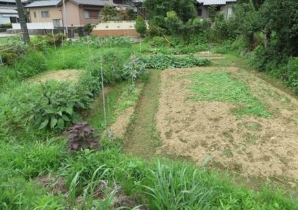夏の畑・1