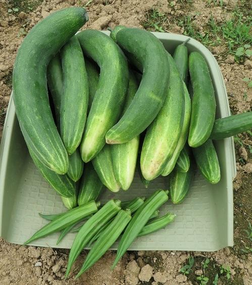 7月17日収穫・4の1