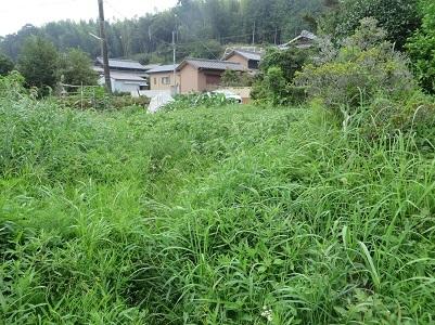 南畑の雑草・1