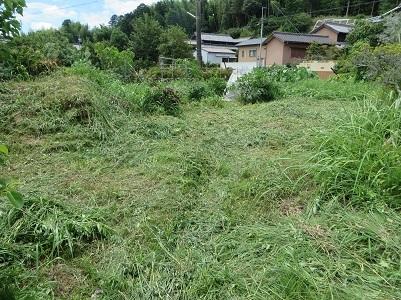 南畑の雑草・2