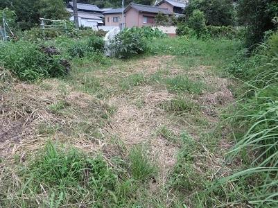 南畑の雑草・3