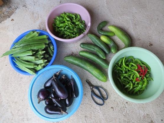 9月9日の野菜・1