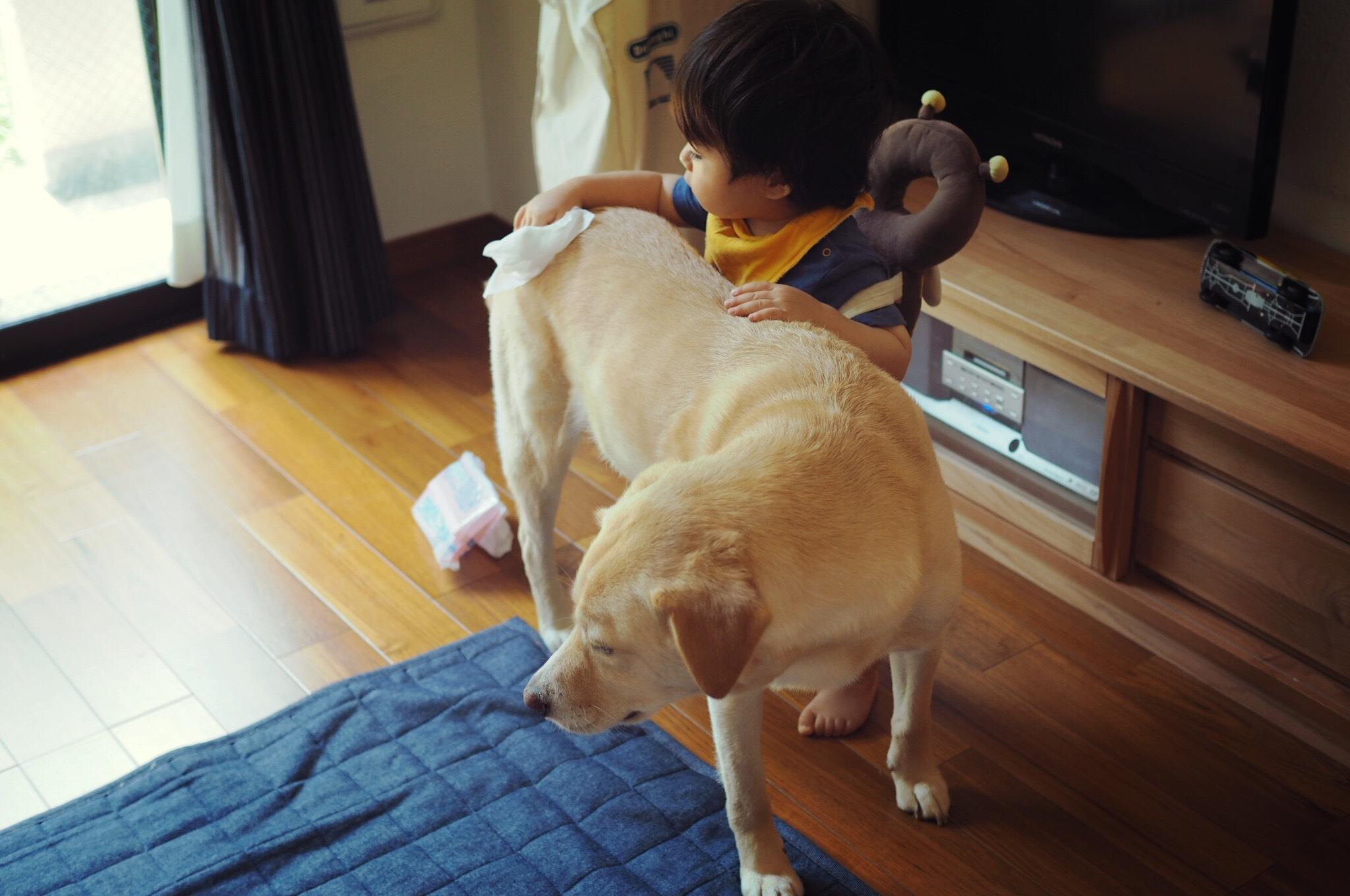 赤ちゃんと犬 赤ちゃんと大型犬 仲良し