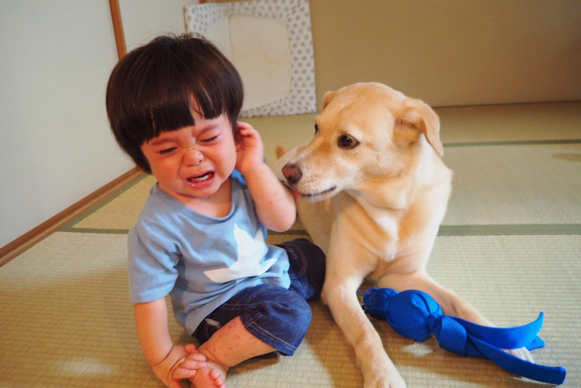 赤ちゃんと犬 赤ちゃんと大型犬 犬が泣いてる赤ちゃんを慰める