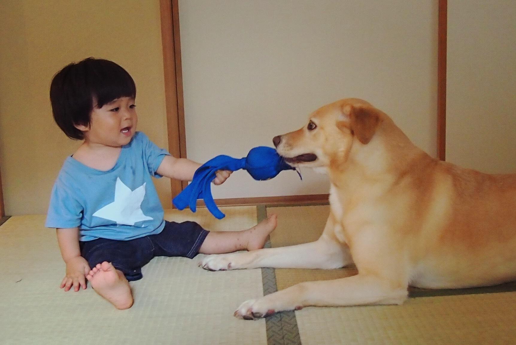 赤ちゃんと犬 赤ちゃんと大型犬 仲良し画像border=