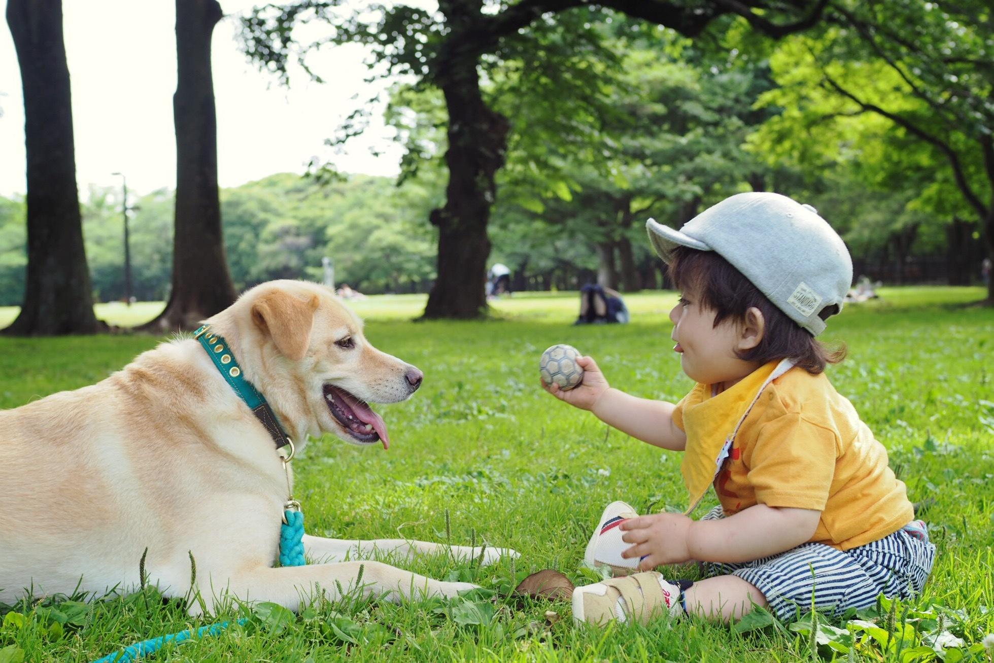 赤ちゃんと犬 赤ちゃんと大型犬 仲良し画像 癒し