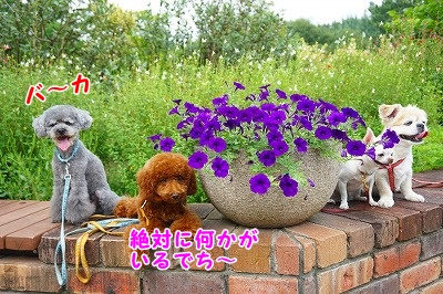 s-DSC01341.jpg