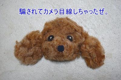 s-DSC01622.jpg