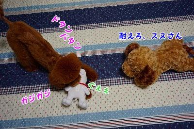 s-DSC01665.jpg