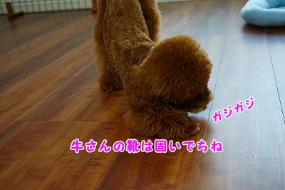 s-DSC01693.jpg