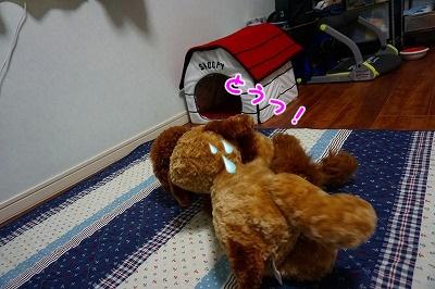 s-DSC01698.jpg