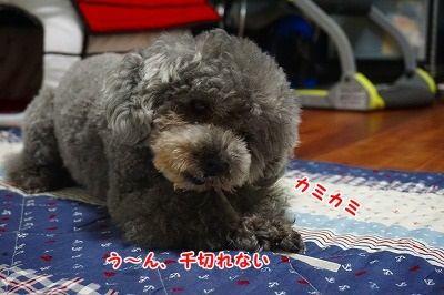 s-DSC01768.jpg