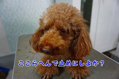 s-DSC01798.jpg
