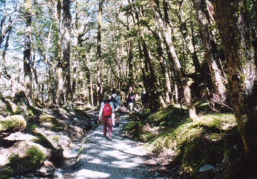 ルートバーンの森