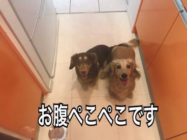 IMG_5427_convert_20170809232514.jpg
