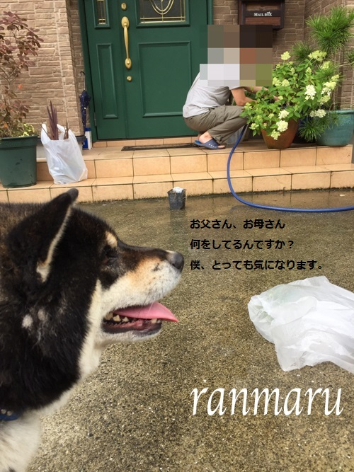 まるちゃん2017072501