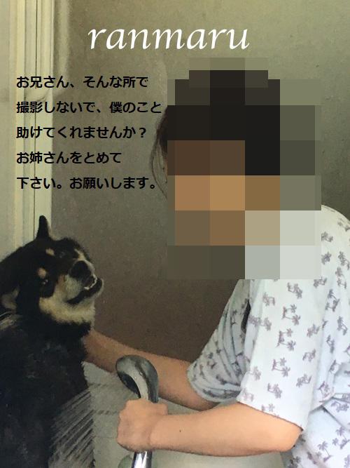 まるちゃん2017072602