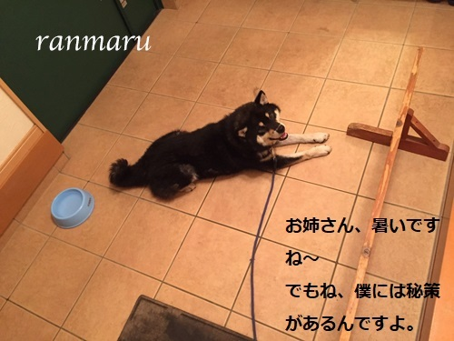 まるちゃん2017072801