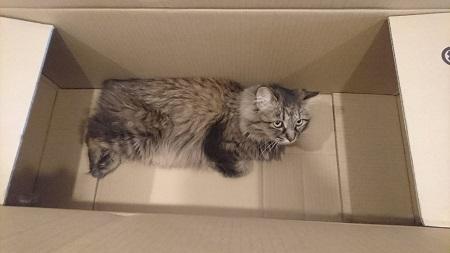 あんず箱2