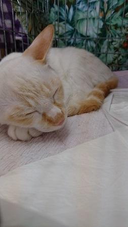眠りミチル