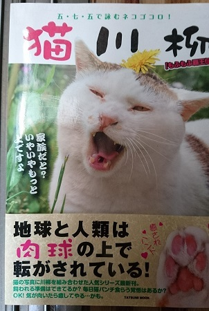 猫川柳表紙