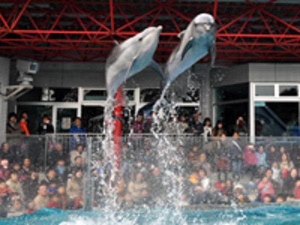 show_dolphin.jpg