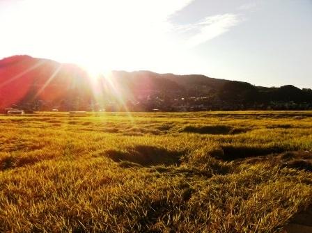 秋の空と黄金