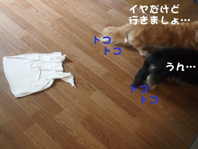 写真2508(№435)1