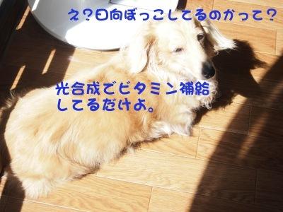 写真2558(№441)1