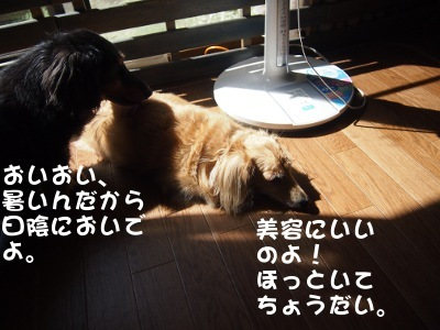 写真2559(№441)1