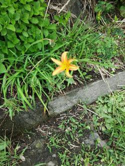 flower_birth.jpg