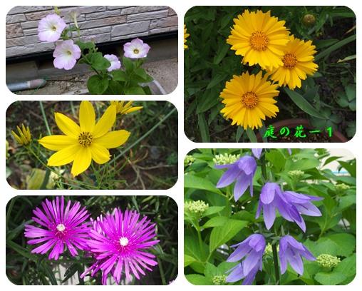 庭の花ー11