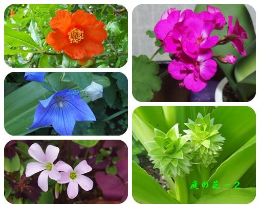 庭の花ー12