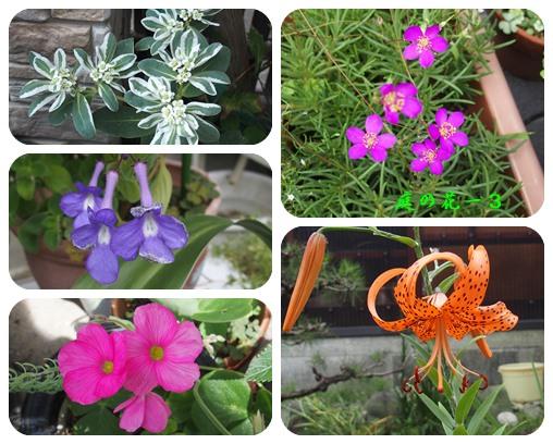 庭の花ー13