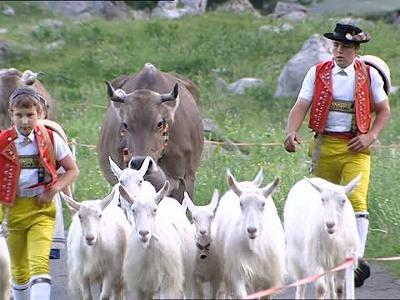 830482005-アペンツエラー-ヤギ-アルプス-家畜追イ-アツペンツエラー民族衣装-群レ-ヤギ