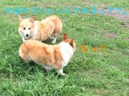 052_convert_20170803142716.jpg